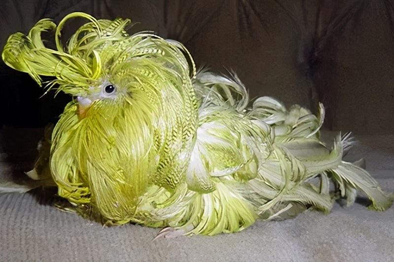 смешные птицы